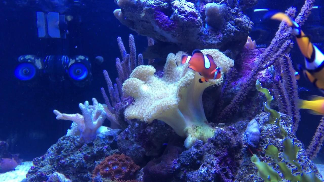 40 gallon peninsula reef equipment and inhabitants youtube