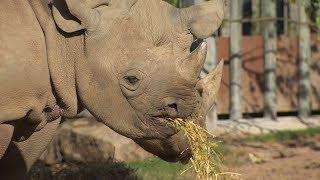 U.K. conference tackles wildlife poaching