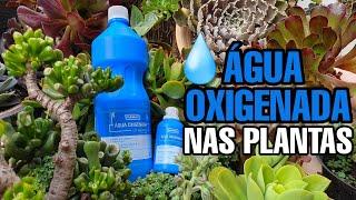 Incrível o Bem da Agua Oxigenada Nas Plantas – Comprovado