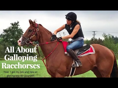 About Galloping Thoroughbreds| How I Got My Job
