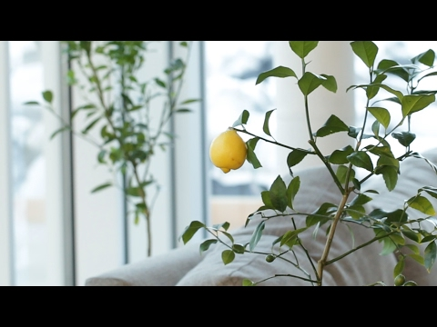 how-to-regrow-fruit-from-your-kitchen