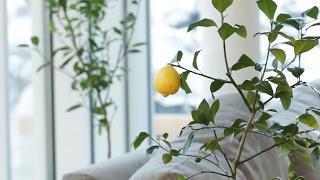 بالفيديو.. كيف تزرعين الفاكهة والخضراوات ''أورجانيك'' في مطبخك؟