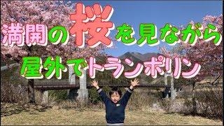 桜満開 神奈川県立秦野戸川公園 巨大トランポリンがある公園を散歩しよう!