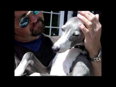 The love of a whippet
