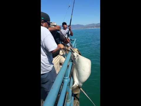 Good day fishing at Santa Monica pier...
