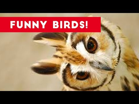 Funny Parrot & Bird Videos Weekly Compilation July 2017 | Funny Pet Videos