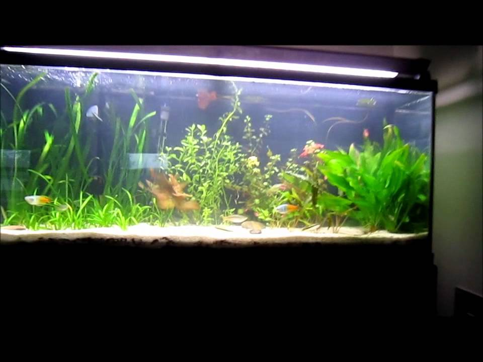 New 55 gallon planted tank set up at the new house youtube for 55 gallon fish tank setup