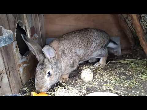 Что едят кролики в домашних условиях зимой