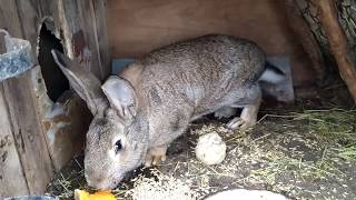 Как правильно и чем кормить кроликов зимой. Дедушкин способ