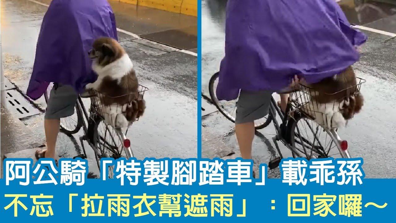 下大雨!阿公騎「特製腳踏車」載狗狗 不忘拉雨衣幫愛孫遮雨:回家囉~