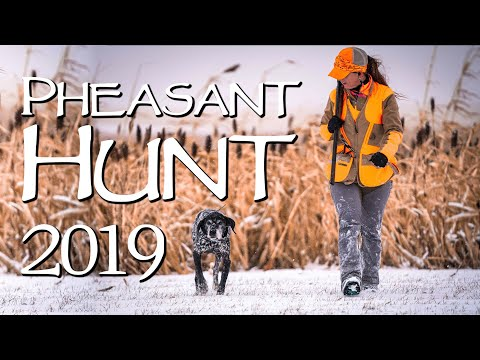 South Dakota Pheasant Hunting 2019 - Thanksgiving Week Day 2