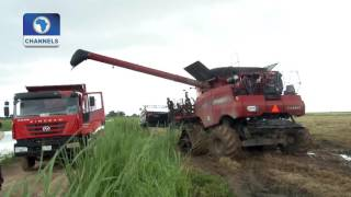 Community Report On Anambra Rice Production Pt. 1