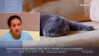 Московских заводчиков кошек обвинили в продаже больных животных