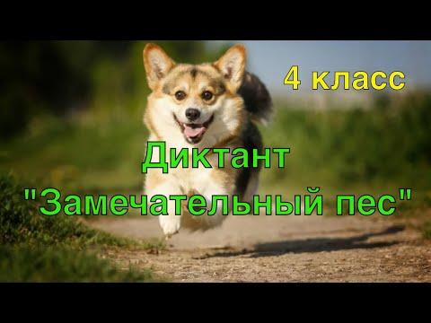 ВПР по русскому языку 4 класс. Диктант и 2 задания к диктанту. 3 вариант