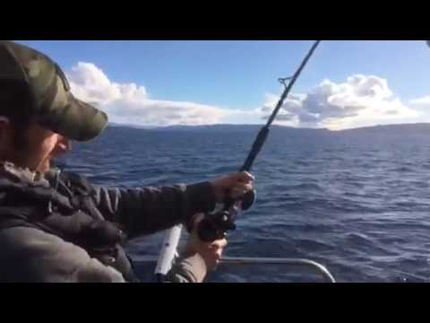 The fight continued, monster fish from Loch Fyne