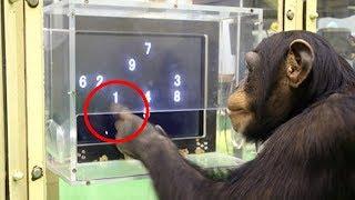 Affen werden zu 100 % immer intelligenter - 10 gruselige und unheimliche creepy Fakten | MythenAkte