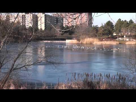 Lake Aquitaine - Mississauga