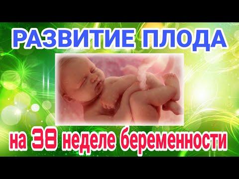 Развитие плода на 38 неделе беременности/Календарь беременности!