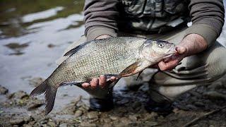 Ловля Леща на Фидер Весной. Река. Рыбалка Брест.