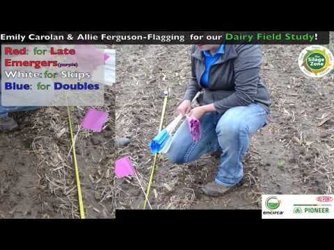 Pioneer Dairy Field Study - Flagging for Dairy Study