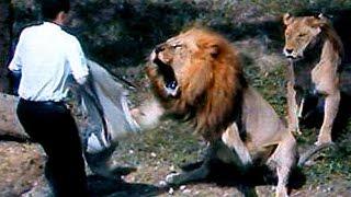 ШОК! Лев напал на человека в прямой трансляции periscop! Слабонервным не смотреть!(ШОК! Лев напал на человека в прямой трансляции periscop! Слабонервным не смотреть!, 2016-02-29T15:36:53.000Z)