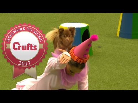 Freestyle Heelwork To Music Competition Part 2/3 | Crufts 2017