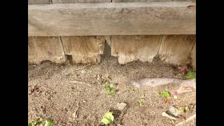 Keep Debris And Dirt Away From Bottom Of Wood Fence Or Plan On Replacing It