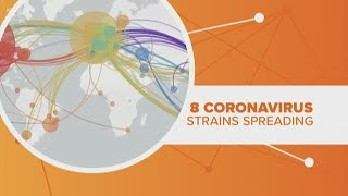 Sequencing scientists tracking 8 strains of this current coronavirus
