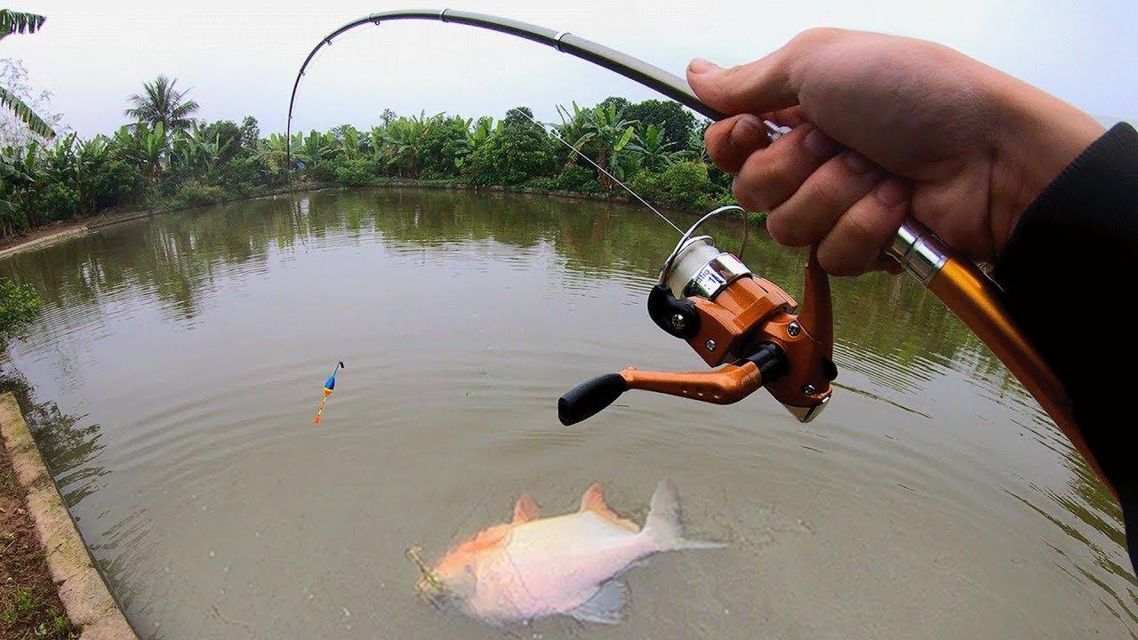 200k Cần Câu Bút Câu Cá Chim Khủng – Câu Cá Giải Trí