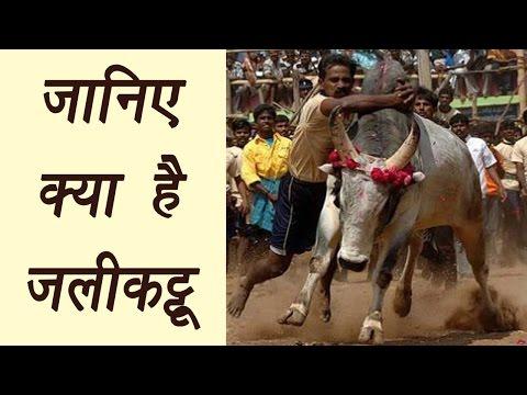 Jallikattu: All you need to know about Tamil Nadu's Bull festival | वनइंडिया हिंदी