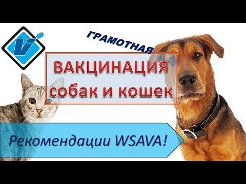 Вакцинация собак и кошек. Рекомендации WSAVA (2017). Часть 1.