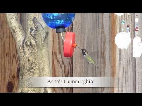 Hummingbirds and More Birds