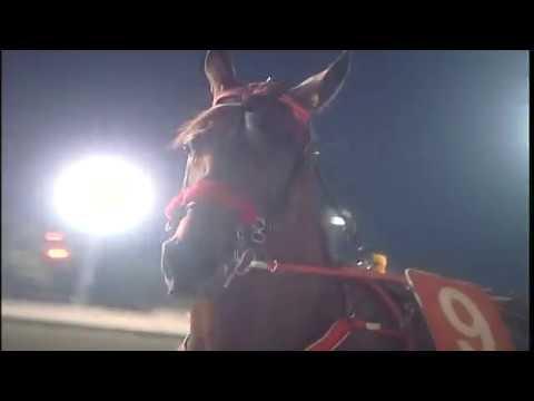 Ippodromo di Cesena I Finalissima Tomaso Grassi Award Superfrustino 2019 - Cavallo Magazine