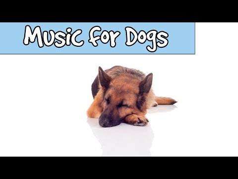 Over 8 Hours of Relax My Dog Music! LONG PLAYLIST Sleep Music for Dogs and Puppies with anxiety