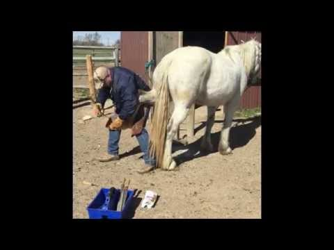 UPDATED! Shoeing A Nervous Horse Using Duct Tape Complete Video