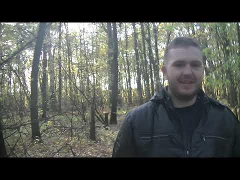 прогулка по лесу г Балашов