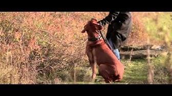 Frohlinder Hundenahrung -- der Film