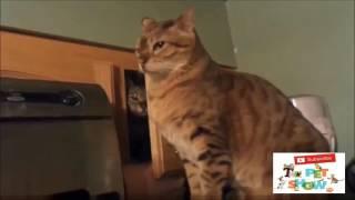 Video Cute/Funny Cat Compilation (Most Popular) Part-1 | THE PET SHOW download MP3, 3GP, MP4, WEBM, AVI, FLV April 2018