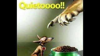 MEMES #vamosTigres por el bicampeonato de la Liga MX #TigresPorLaSexta vence Xolos va con #Chivas