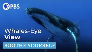 Humpback Whales | Soothe Yourself | PBS NATURE