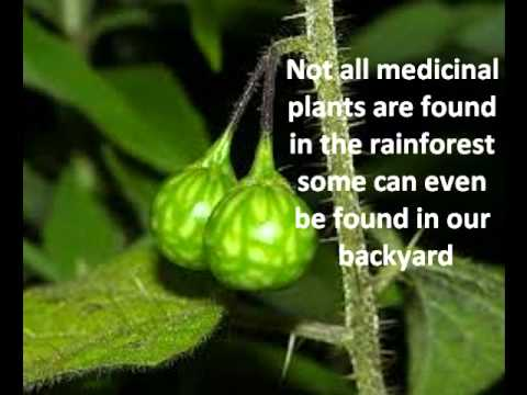Medicinal Plants In The Rainforest