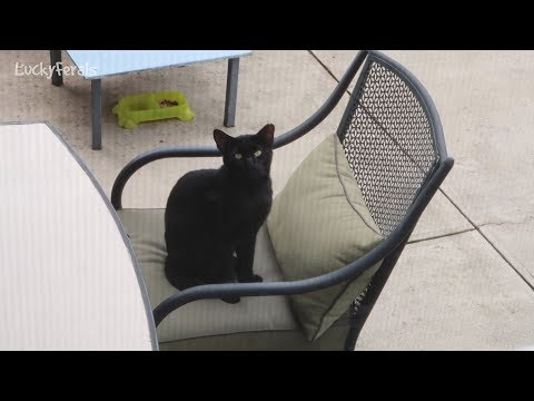 Boo Day 16 - Cat Patio Furniture - Training And Socializing A Feral Cat
