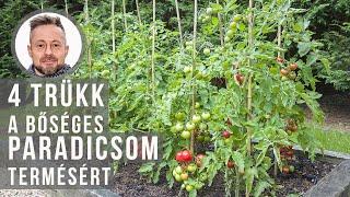 4 trükk a bőséges paradicsom terméséért
