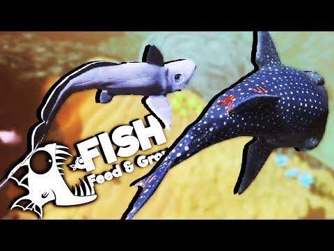 Deadliest Shark Ever! - Deep Water Ghost Shark! - Feed and Grow Fish Gameplay - New Update