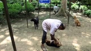 Rajesh Mittal, the animal saviour of Green Park