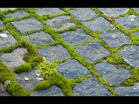 Очистка тротуарной плитки от мха