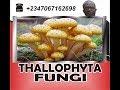 Thallophyta, fungi