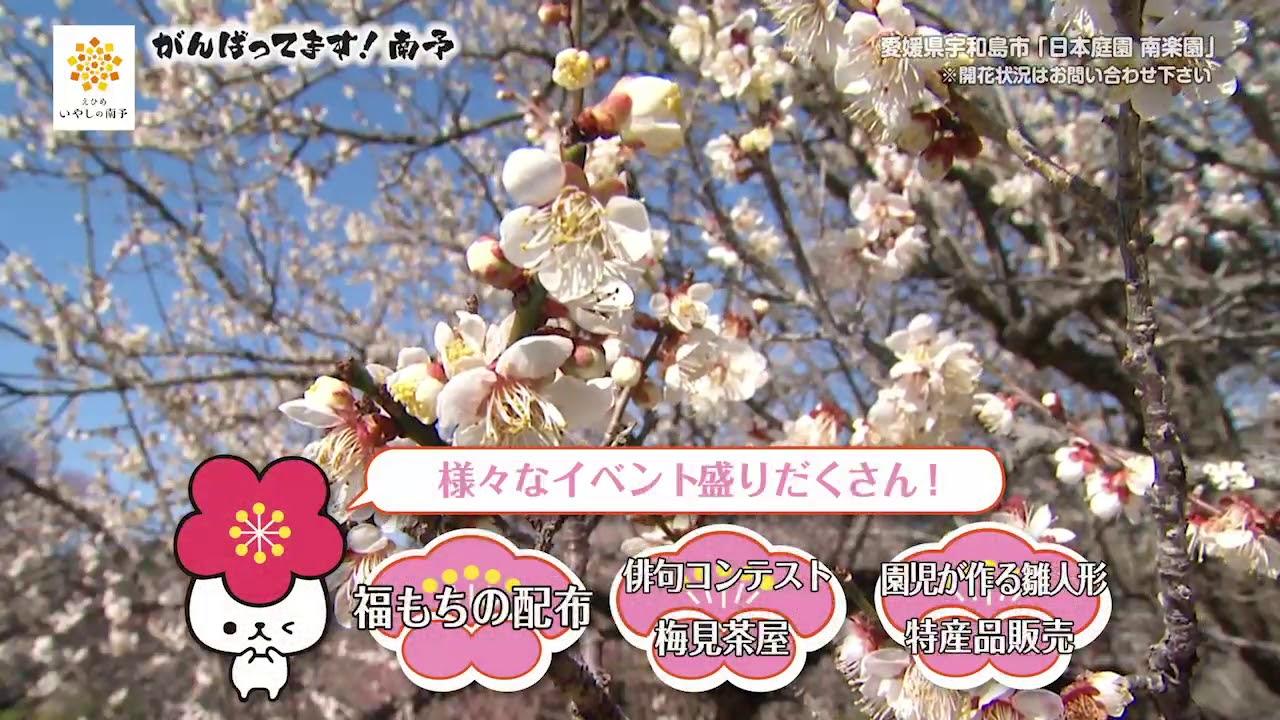 梅 南 まつり 楽園 2021年 日本庭園