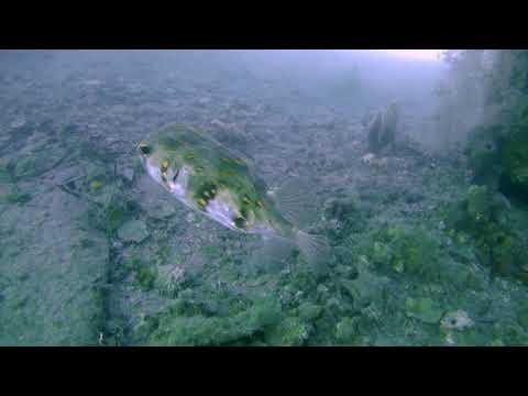 Ammo Jetty Perth Scuba Dive