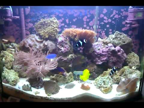 36 gal bowfront reef tank youtube for 38 gallon fish tank